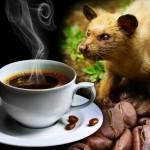 вьетнамский кофе Kopi Luwak