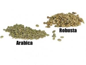 робуста и арабика - в чем разница